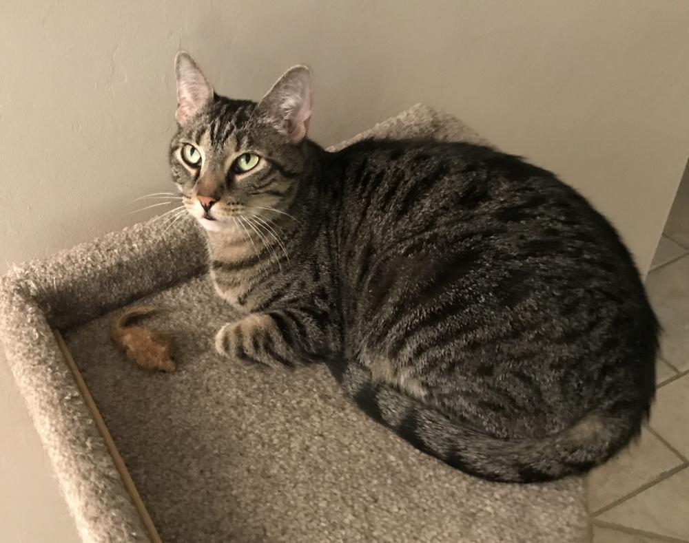 Lost Male Cat last seen Near Middle River Dr & NE 26th St, Fort Lauderdale, FL 33306
