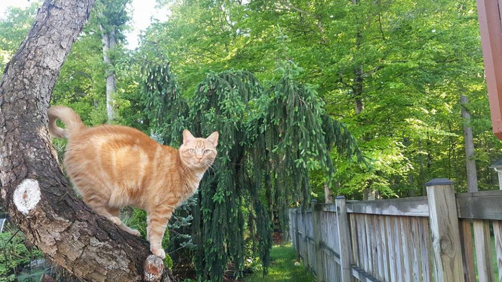Lost Male Cat last seen Near Olddale Rd & Barrymore Rd, Centreville, VA 20120