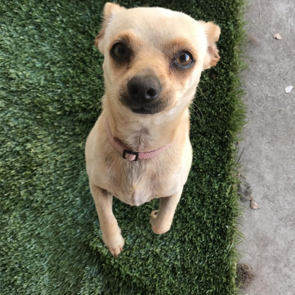 Lost Female Dog last seen Near W 125th St & Felton Ave, Hawthorne, CA 90250