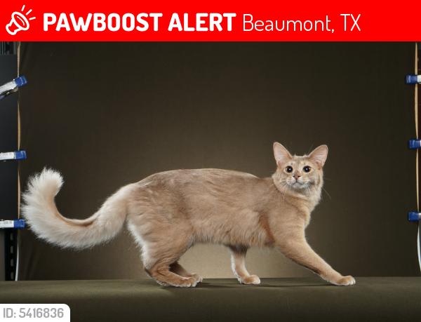 Deceased Male Cat last seen Near Hwy 365 & Country Ln, Beaumont, TX 77705
