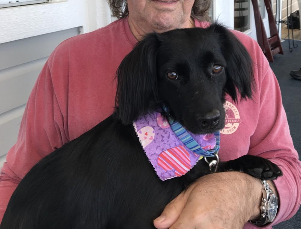 Lost Female Dog last seen Near G Martin Harold Dr & NE 9th St, Fort Lauderdale, FL 33304