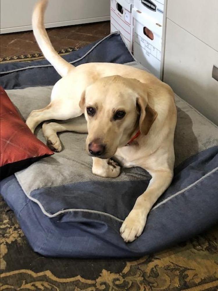 Lost Female Dog last seen Near Country Ln & Kenilworth Blvd, San Antonio, TX 78209