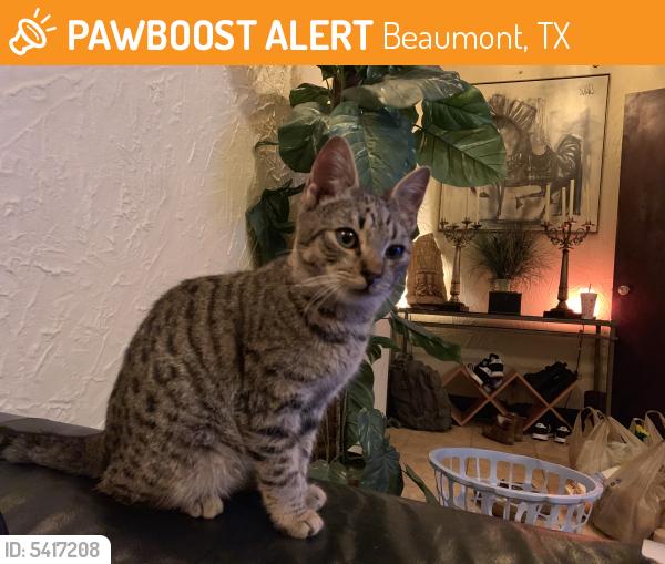 Found/Stray Male Cat last seen Near Calder Ave & N M L King Jr Pkwy, Beaumont, TX 77701