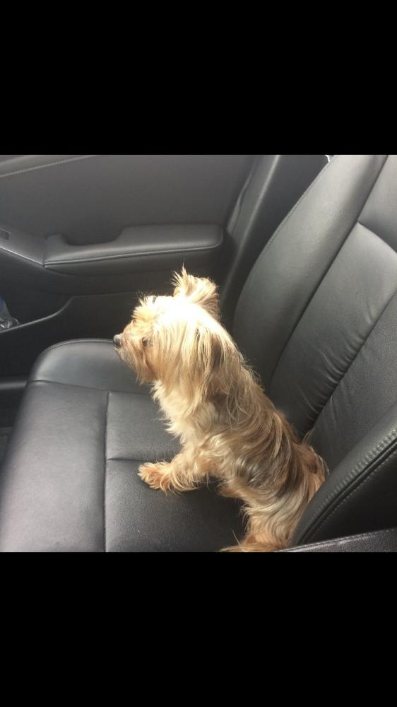 Lost Male Dog last seen Near Miami Gardens Rd & Sutton Rd, West Park, FL 33023