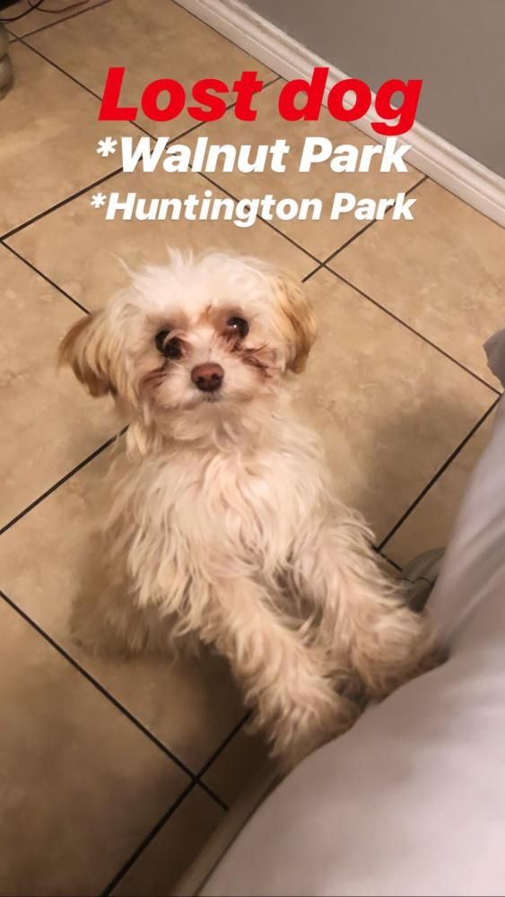Lost Male Dog last seen Near Santa Fe Ave & E Florence Ave, Huntington Park, CA 90255