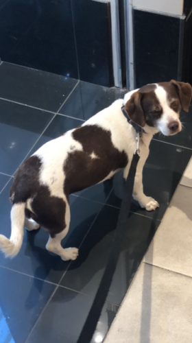 Lost Female Dog last seen Near Wavecrest Ave & Pacific Ave, Los Angeles, CA 90291