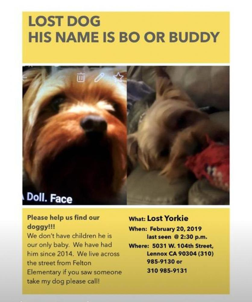 Lost Male Dog last seen Near W 104th St & S Redfern Ave, Lennox, CA 90304