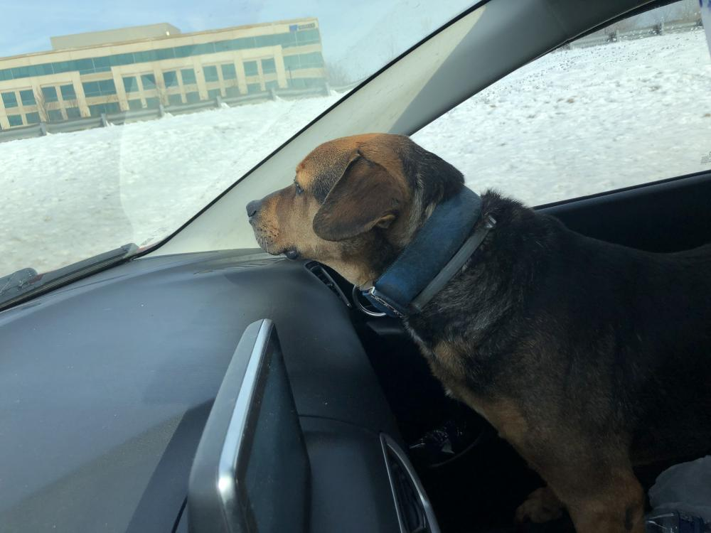 Found/Stray Male Dog last seen Near Sunrise Valley Dr & Coppermine Rd, Herndon, VA 20171