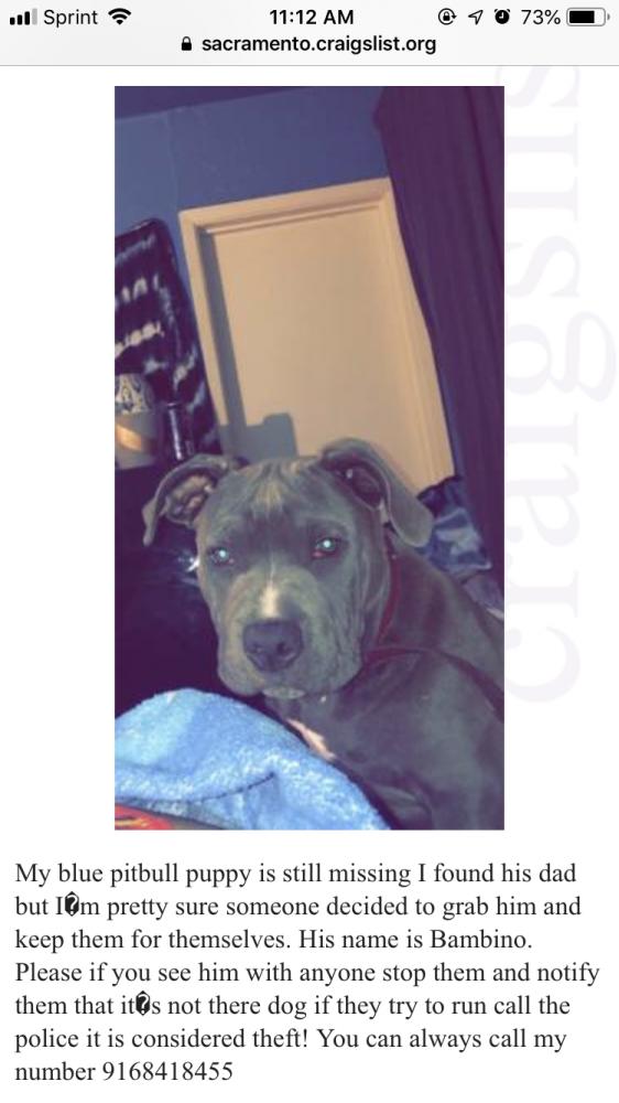 29 Top Photos Craigslist Atlanta Free Puppies : Dogs For ...