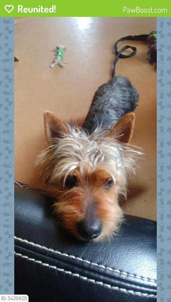 Reunited Male Dog last seen Gulfway Drive Port Arthur, Groves, TX 77642