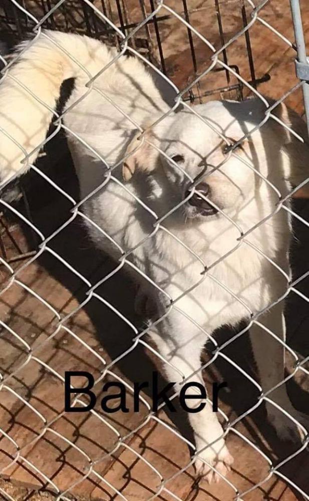 Lost Female Dog last seen Foggy Bottom Road, Bluemont, VA, USA, Blue Ridge, VA 20135