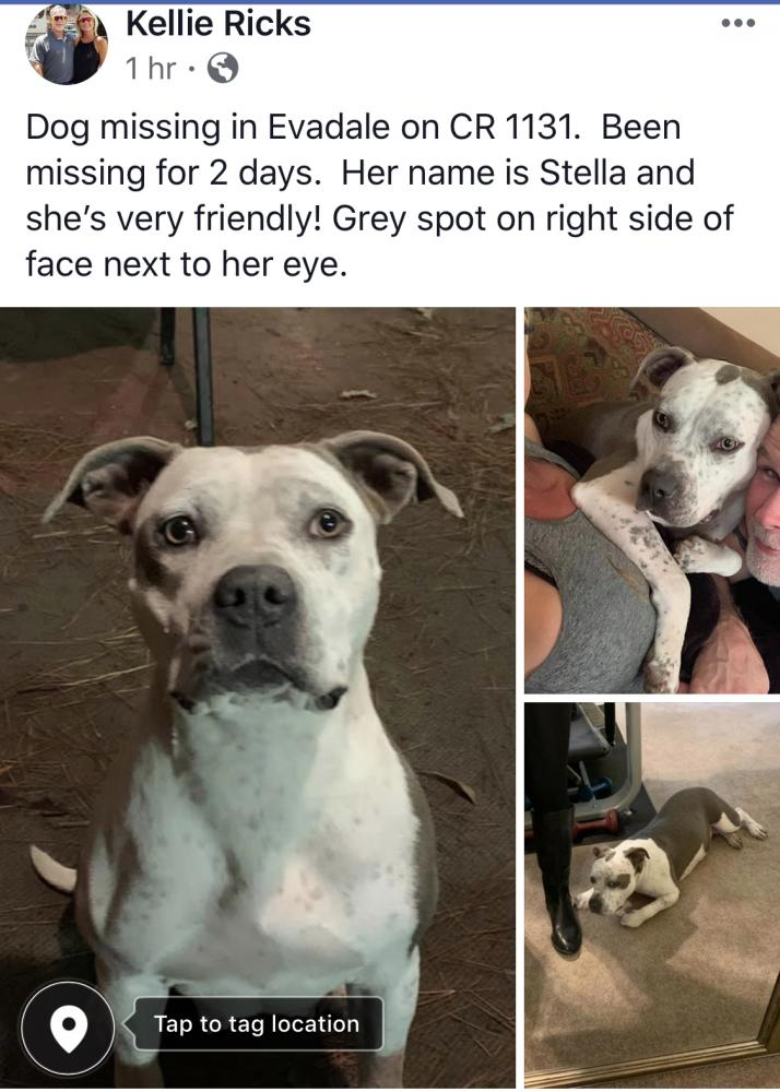 Lost Female Dog last seen Near FM 1131 Rd & Pvt Rd 8385, Silsbee, TX 77656