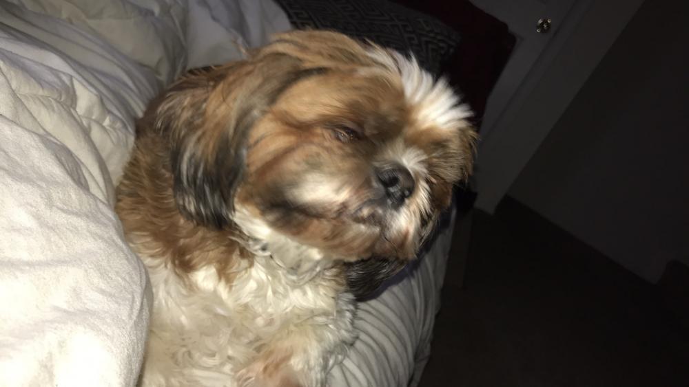 Lost Male Dog last seen Near Jefferson Davis Hwy & River Ridge Blvd, Dumfries, VA 22026