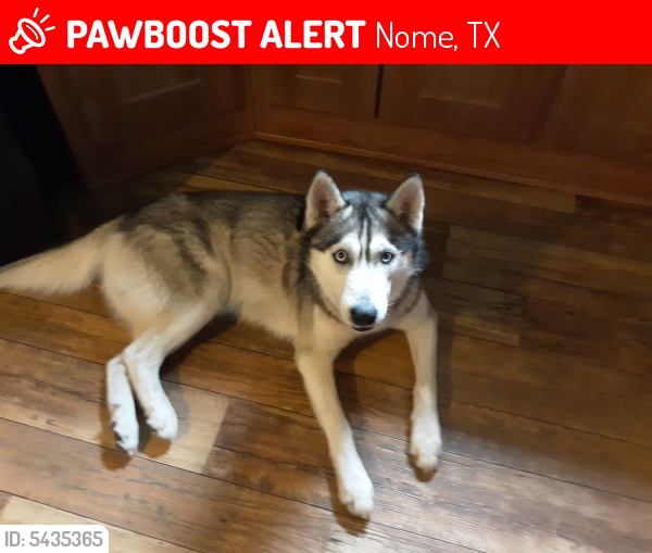 Lost Male Dog last seen Hwy. 90 and Hwy 365, Nome, TX 77659