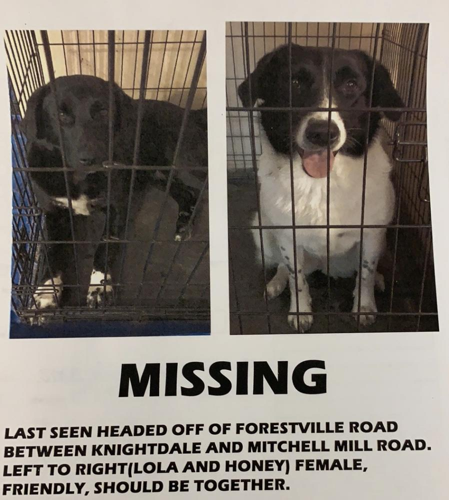 Lost Female Dog last seen Near Forestville Rd Raleigh, NC  27616 United States, Raleigh, NC 27616