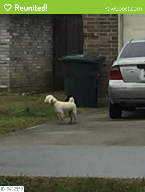 Reunited Unknown Dog last seen Near San Diego St & Guess Rd, Beaumont, TX 77708