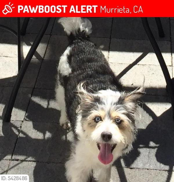 Lost Female Dog last seen Near Olympia Rose Dr, Murrieta, CA 92563