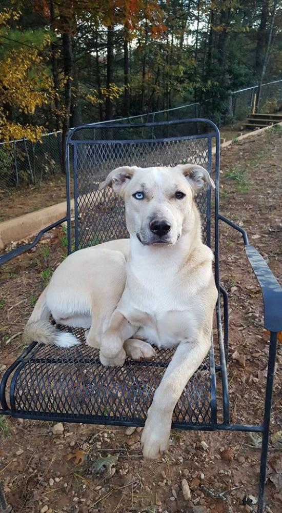 Lost & Found Dogs, Cats, and Pets in North Carolina 28604 - Page 4