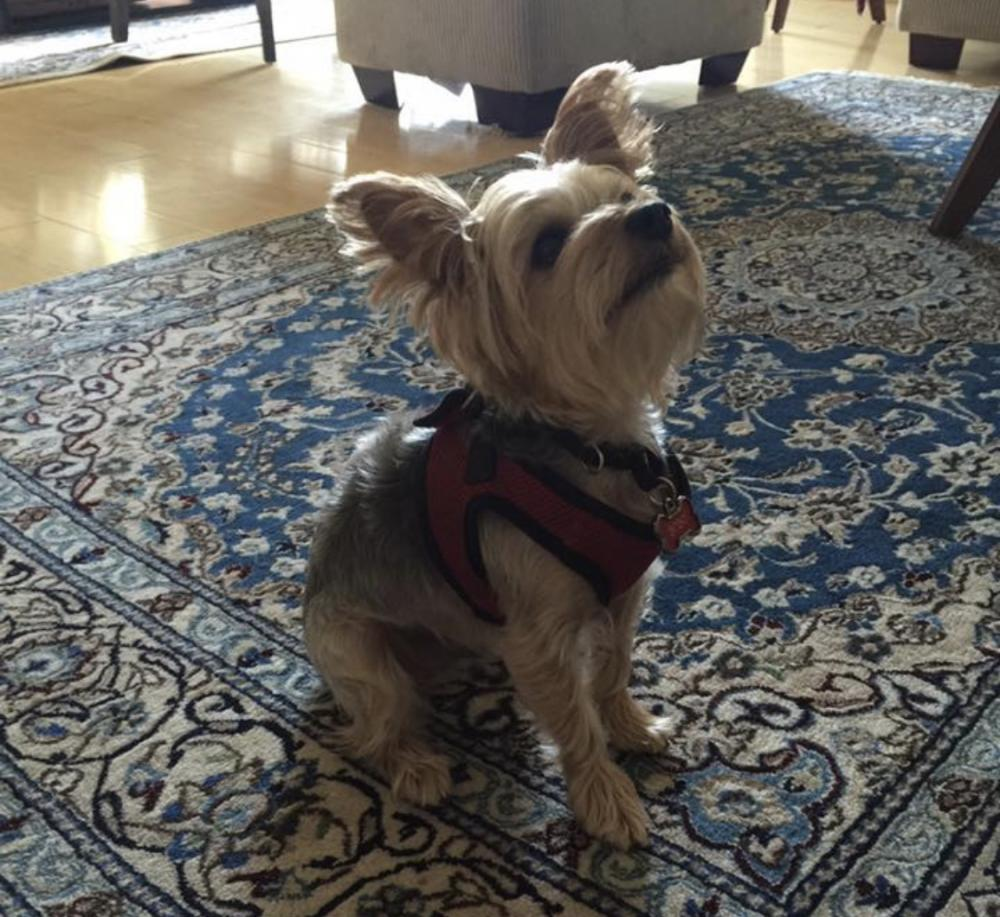 Lost Male Dog last seen Norbeck Farm Drive, Olney, MD, USA, Olney, MD 20832