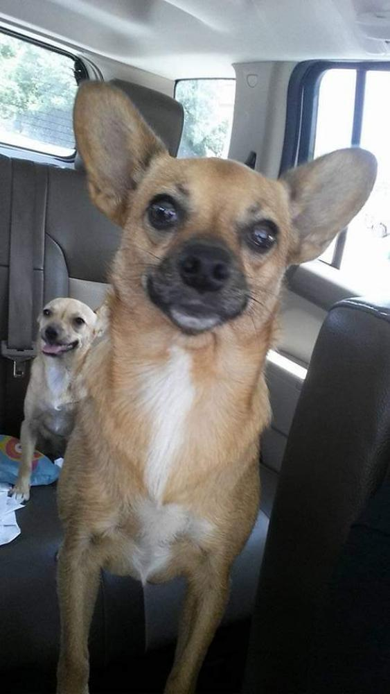 Lost Female Dog last seen Near S 14th St & Ave I, Nederland, TX 77627