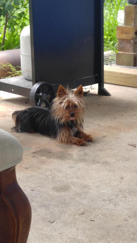 Lost Male Dog last seen Near Abby Lane, Kountze, TX, USA, Kountze, TX 77625