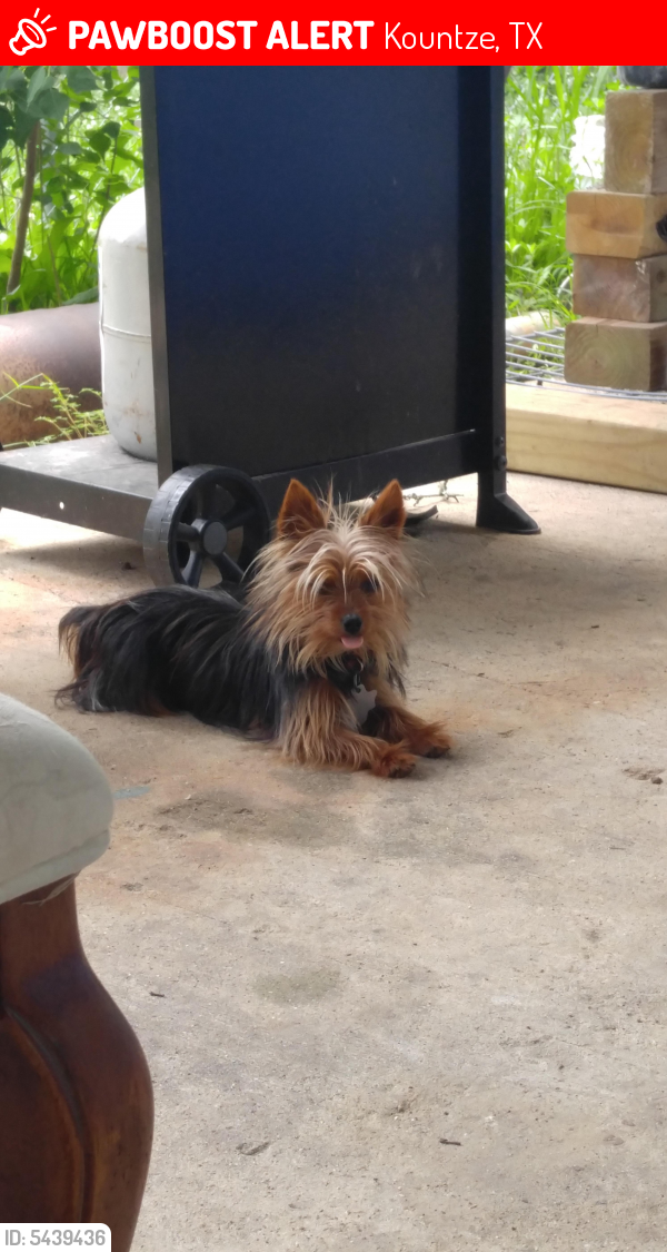 Lost Male Dog last seen Near Abby Lane, Kountze, TX, USA, Kountze, TX 77625