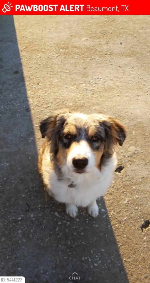 Lost Female Dog last seen Near Daniel Dr & Donald Dr, Beaumont, TX 77705