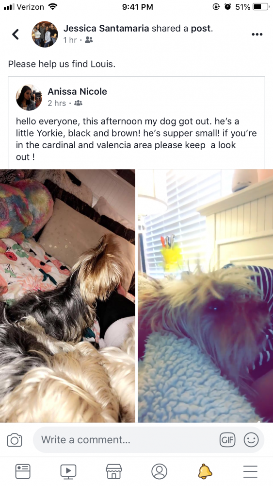 Lost & Found Dogs, Cats, and Pets in Tucson, AZ 85746 - Page 1