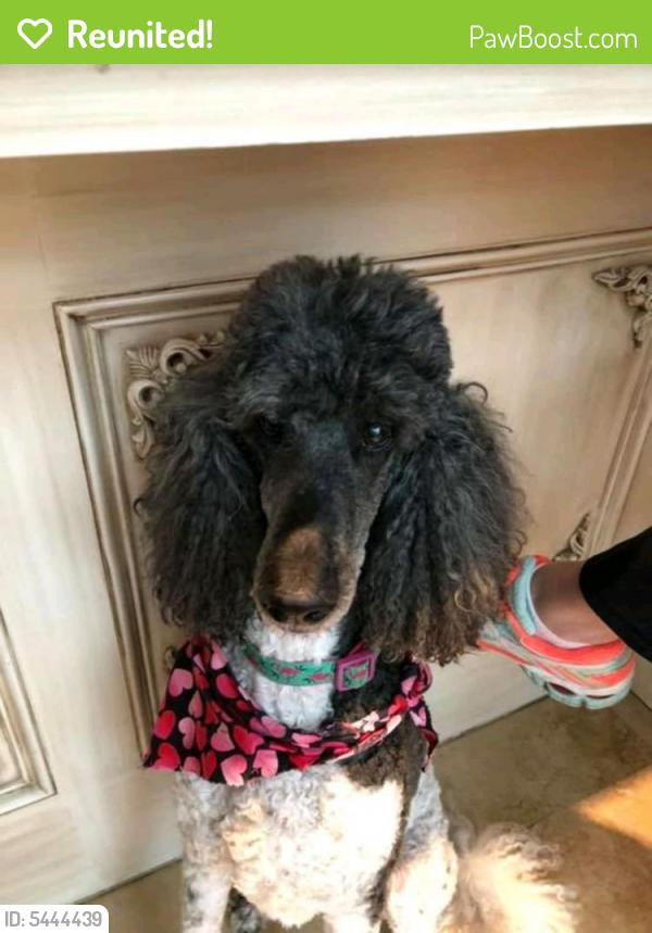 Reunited Female Dog last seen Near Folsom Dr & Lucas Rd, Beaumont, TX 77706