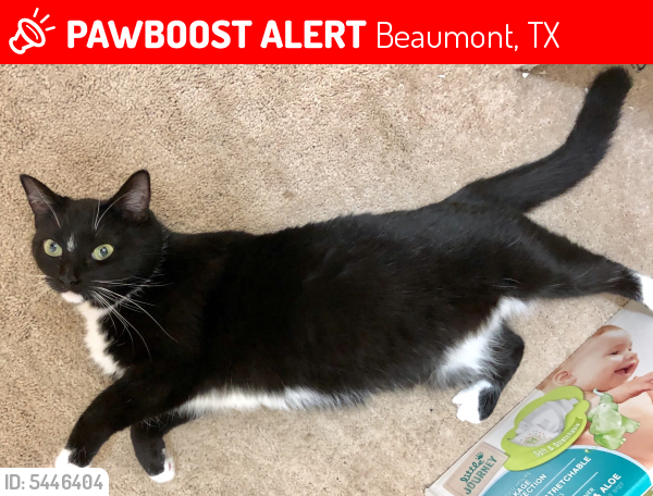 Lost Female Cat last seen Near Ivy Ln & Westgate Dr, Beaumont, TX 77706