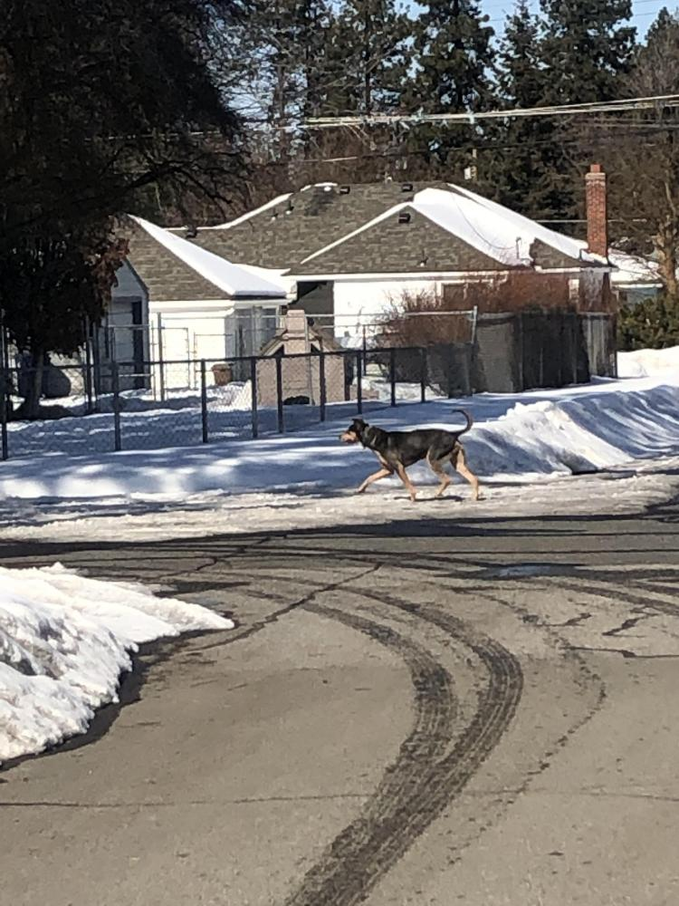 Found/Stray Male Dog last seen Near 40th St & Eunice Ave, Port Arthur, TX 77642