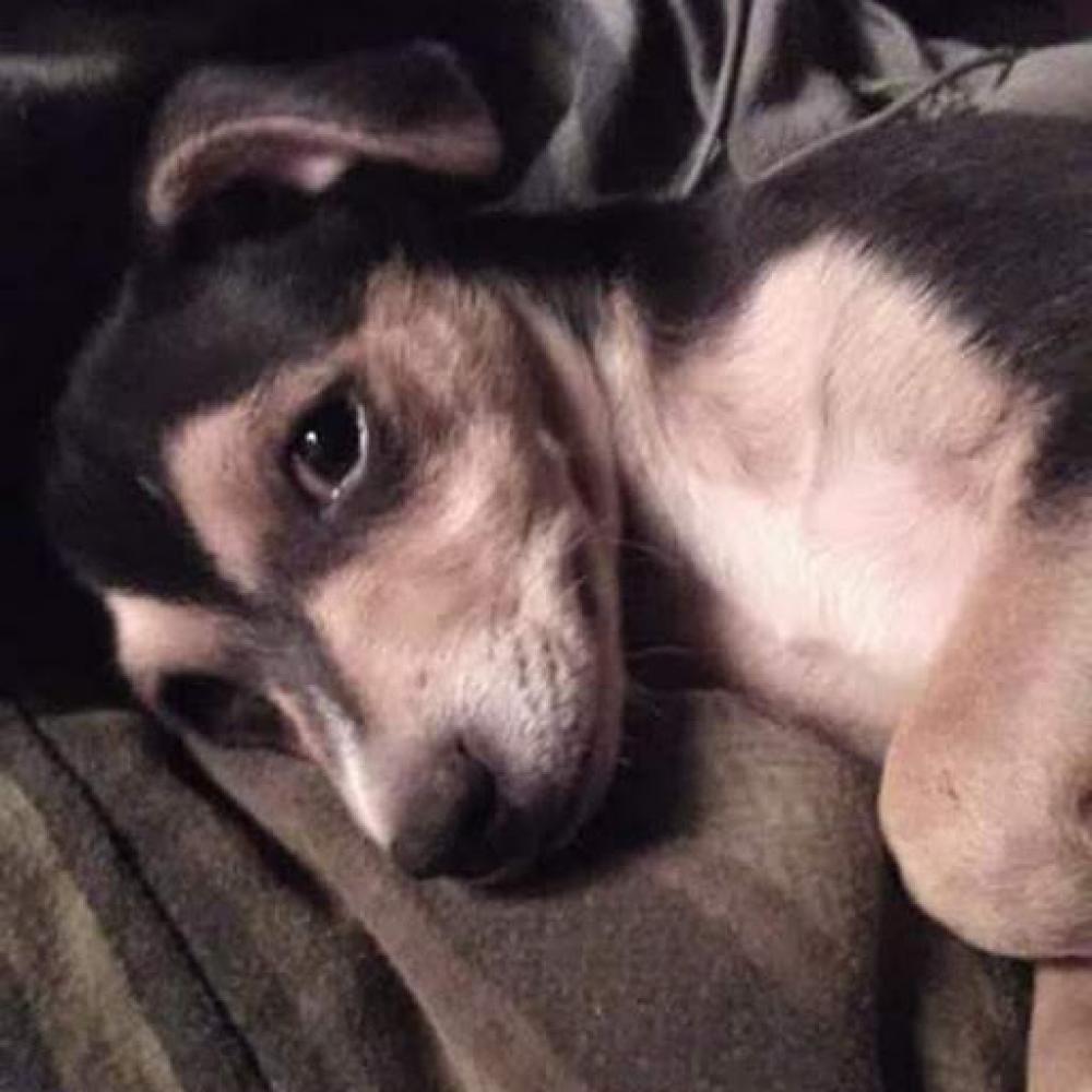 Lost Male Dog last seen Charter wy, Stockton, CA 95206