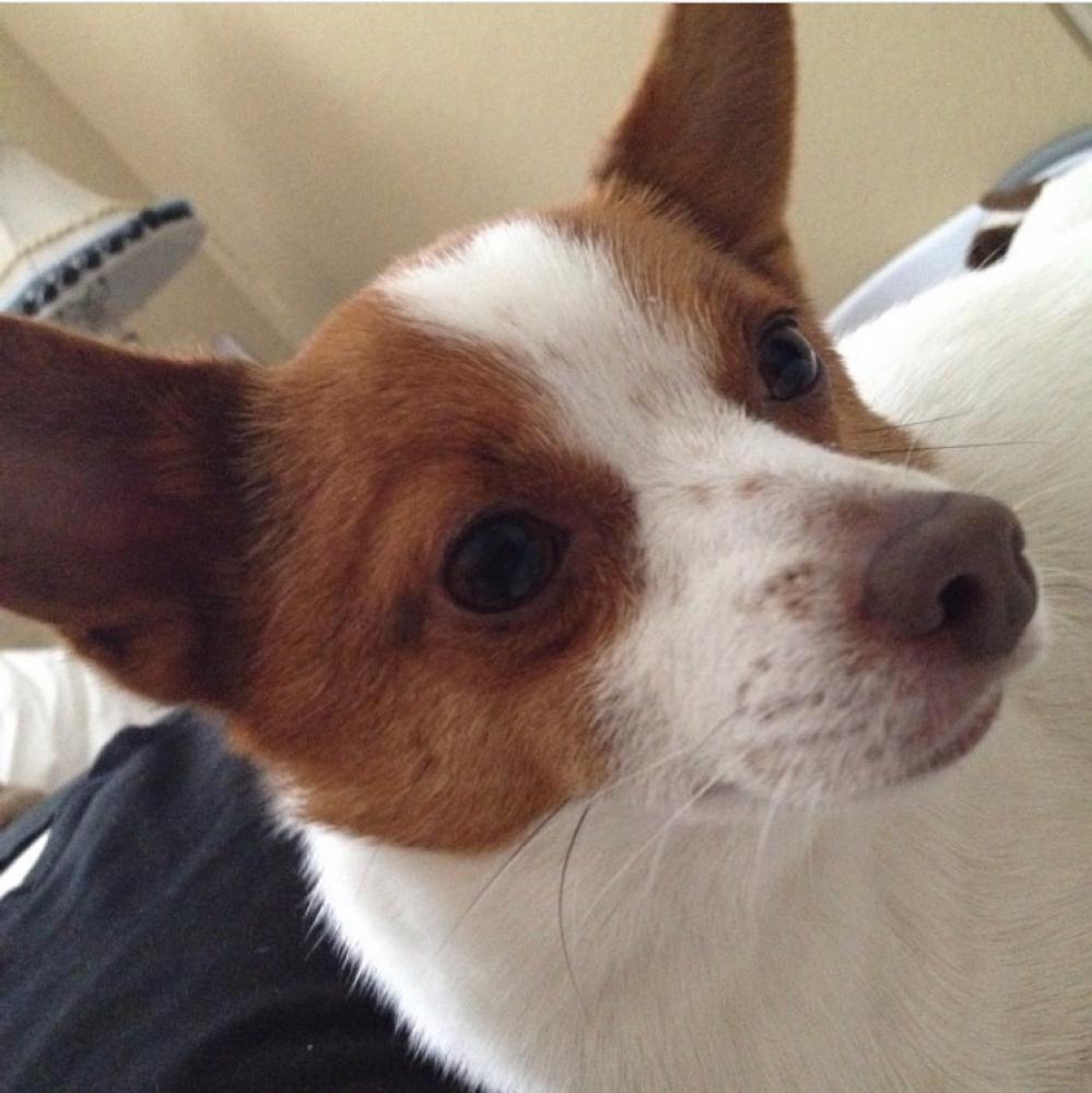 Lost Male Dog last seen Near Nebraska Dr & Michigan Blvd, Concord, CA 94521