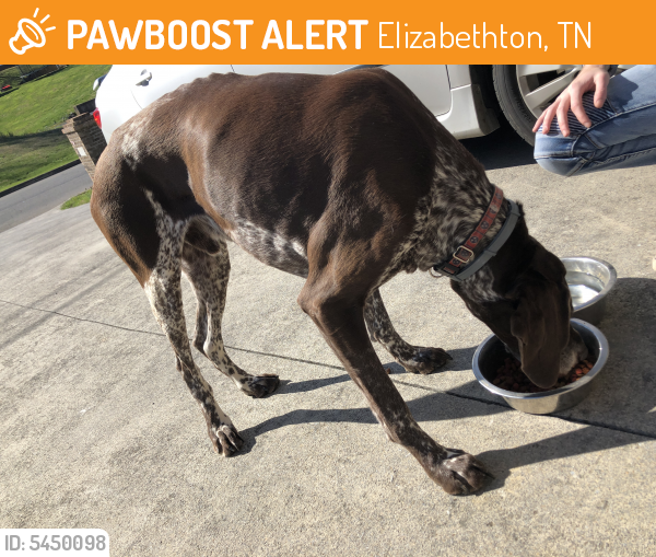 Found/Stray Male Dog last seen Near Milligan College Dr & Blowers Blvd, Elizabethton, TN 37682