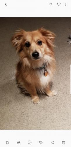 Lost Male Dog last seen Near Keller Springs Rd & Addison Rd, Addison, TX 75001
