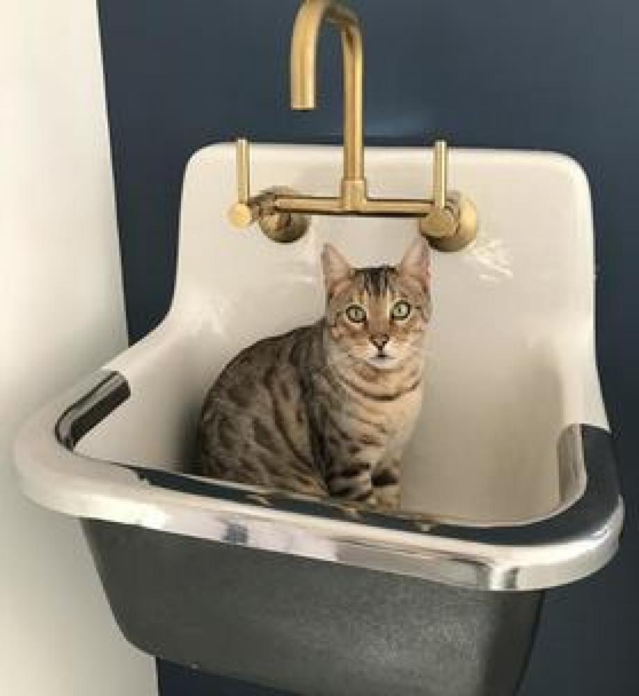 Lost Male Cat last seen Near Dowlais Drive, Rockville, MD, USA, Rockville, MD 20853