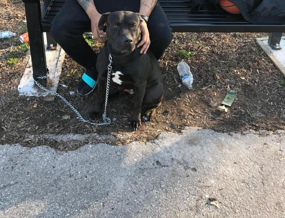 Lost Male Dog last seen Near High St & E Moore St, Norristown, PA 19401