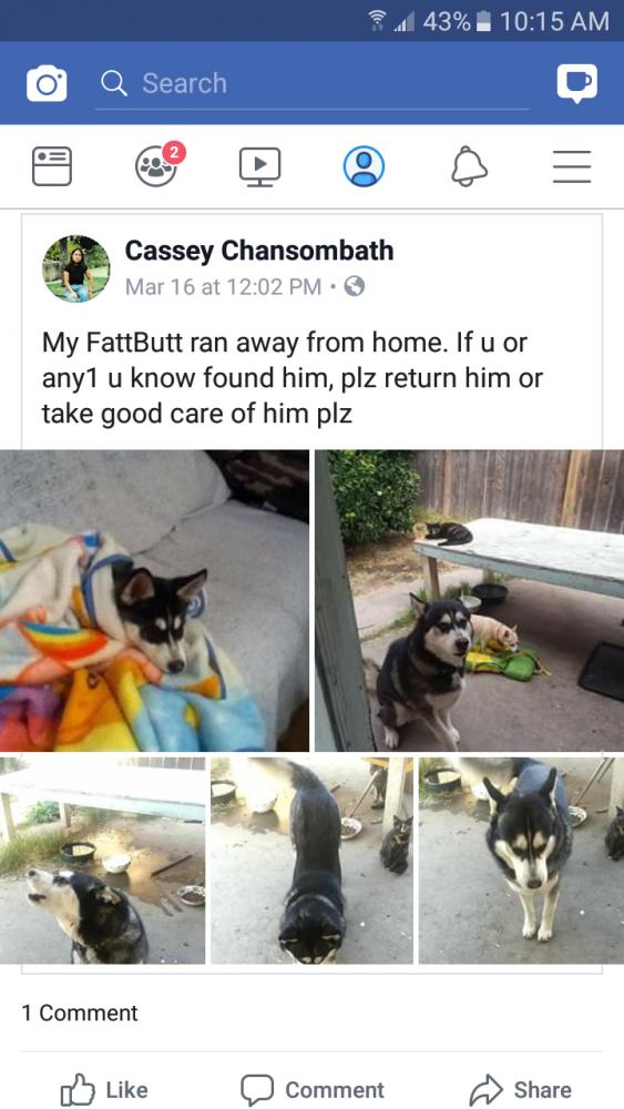 Lost Male Dog last seen Near Valmora Dr & Westmora Ave, Stockton, CA 95210