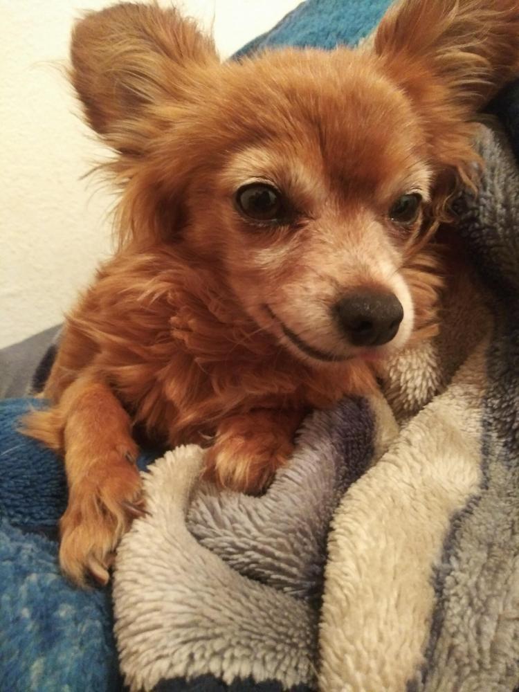 Lost Male Dog last seen Near N el Mirage Rd & Ventura St, El Mirage, AZ 85335