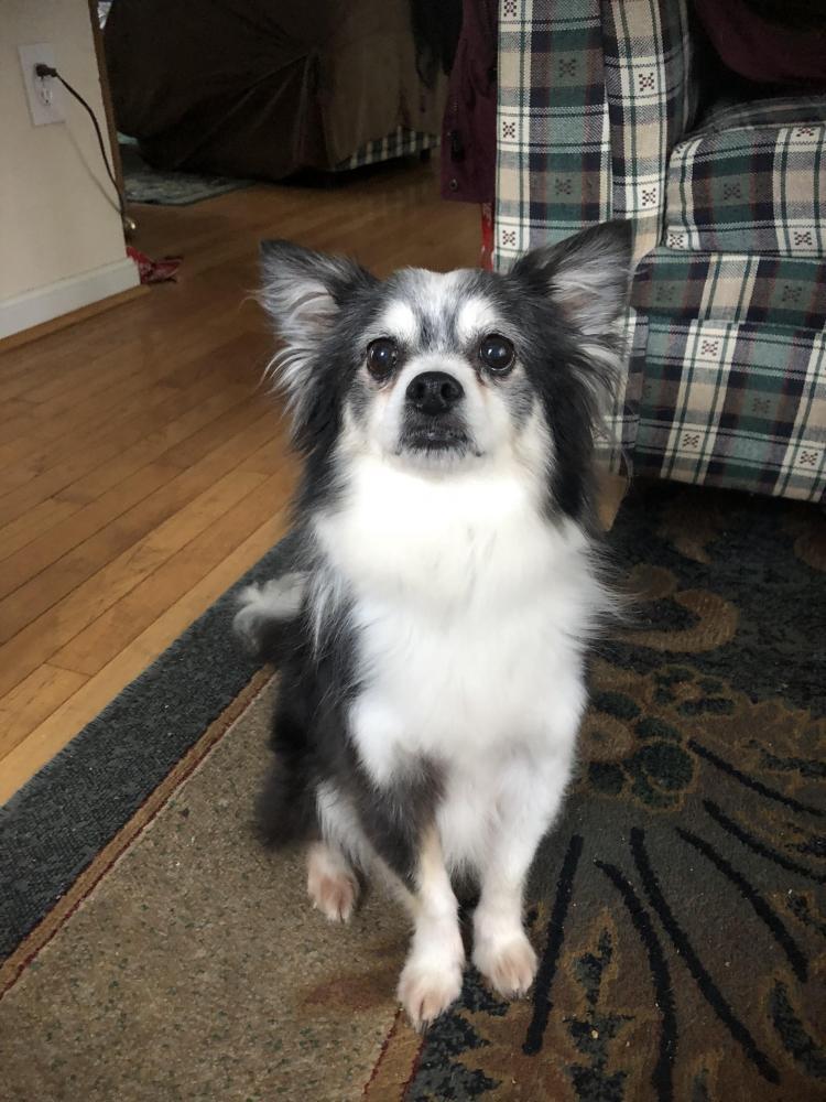Found/Stray Male Dog last seen Near Kirkdale Dr & Old Delaney Rd, Woodbridge, VA 22193