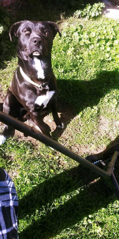 Lost Male Dog last seen Near Argonaut St & Irene St, Stockton, CA 95206