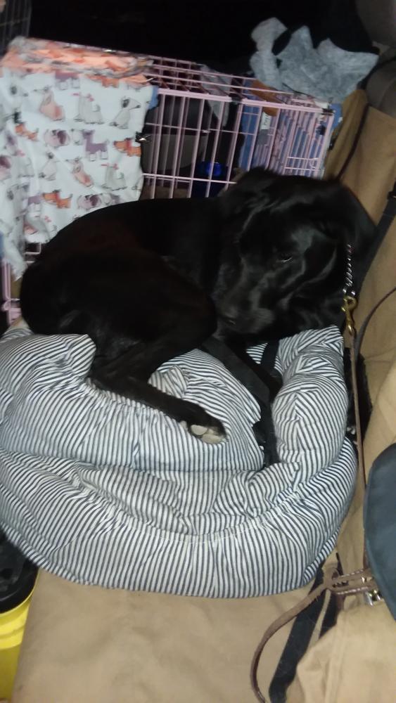 Lost Female Dog last seen Near N 40th St & Thunderbird rd, Phoenix, AZ 85032