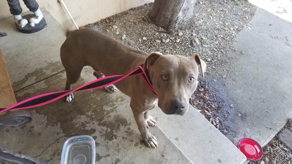 Found/Stray Male Dog last seen Near R Grande Dr & Putnam St, Antioch, CA 94509