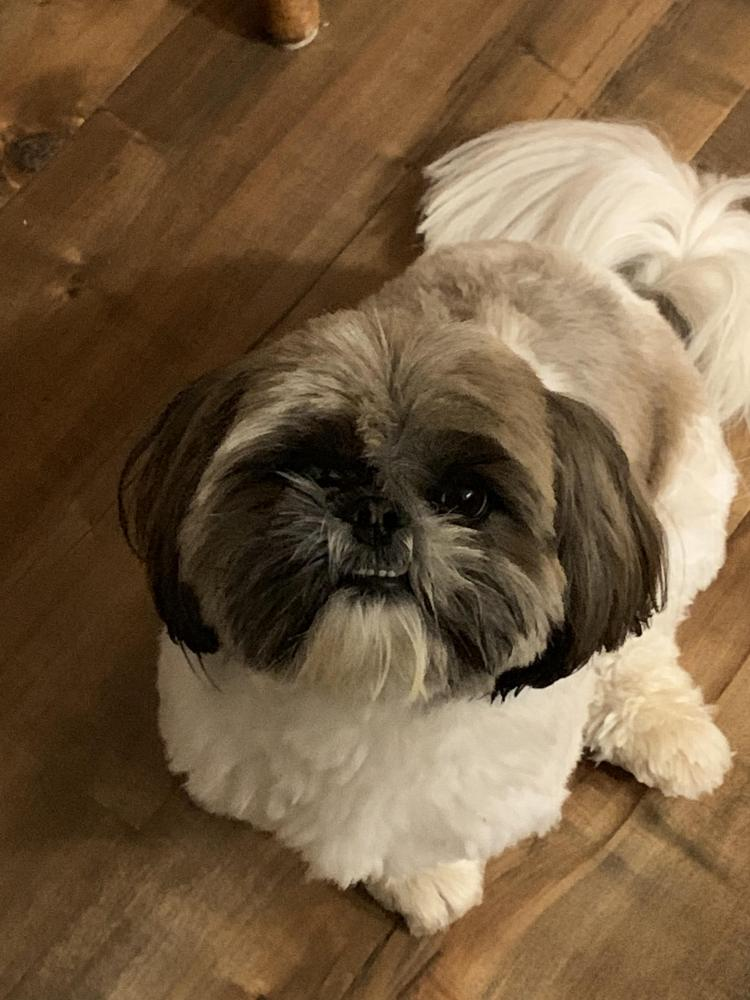 Lost Male Dog last seen Near Hudson Aly & Hudson Dr, Brentwood, CA 94513