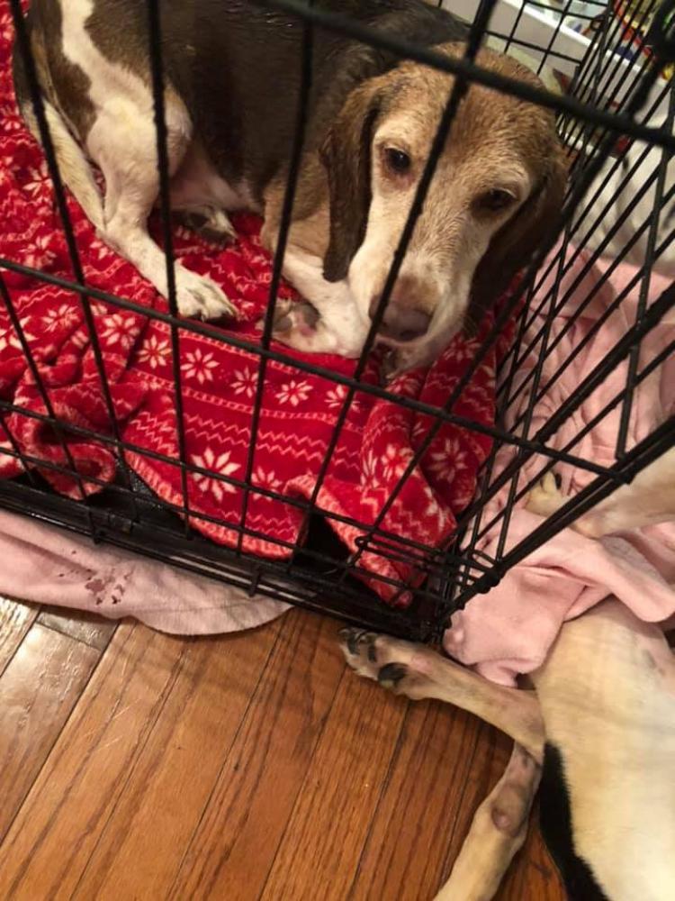Found/Stray Male Dog last seen Near Plata St & Megan Street, Clinton, MD 20735