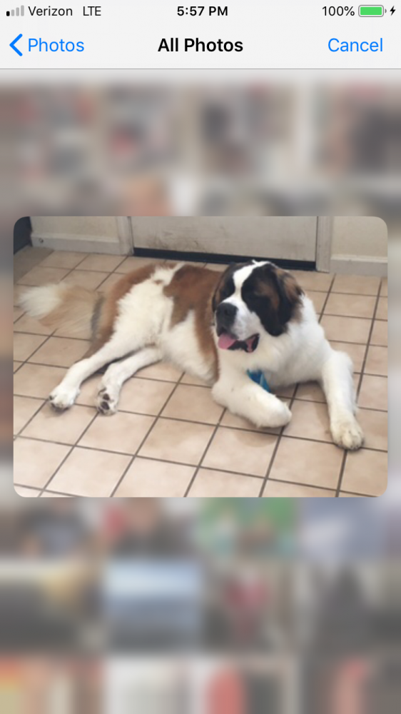 Lost Male Dog last seen Near Baywood Way & Kirkwood Way, Lathrop, CA 95330