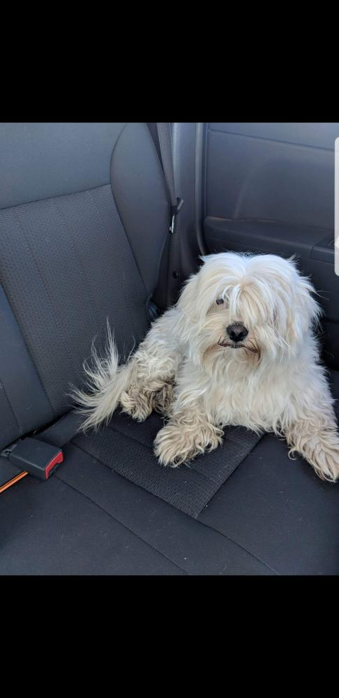 Found/Stray Male Dog last seen Near N 67th Ave & W Sweetwater Ave, Glendale, AZ 85381