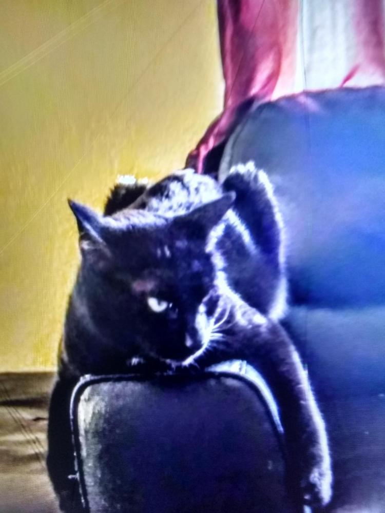 Lost Male Cat last seen Near Orange Grove Apartment & N Gilbert Rd, Mesa, AZ 85203