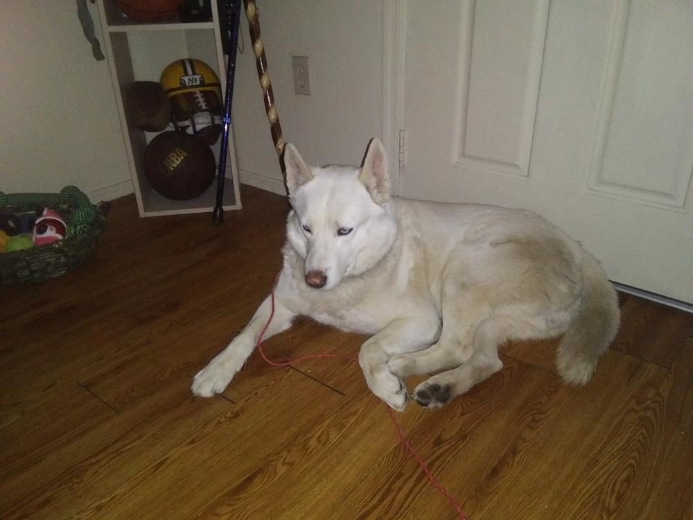 Found/Stray Male Dog last seen Horn &Brodway Mesa AZ., Mesa, AZ 85204