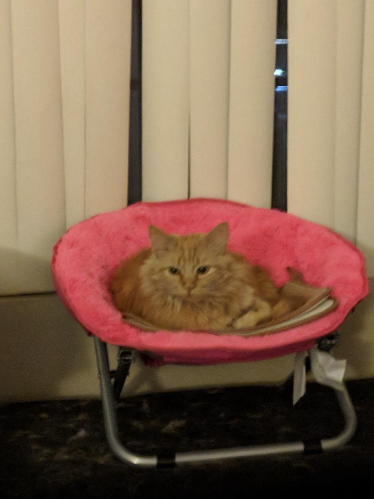 Lost Female Cat last seen Near Emparrado at Park Centre & E Brown Rd, Mesa, AZ 85201